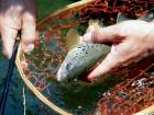 fischen in luxemburg