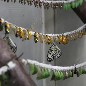 the butterfly garden grevenmacher 03