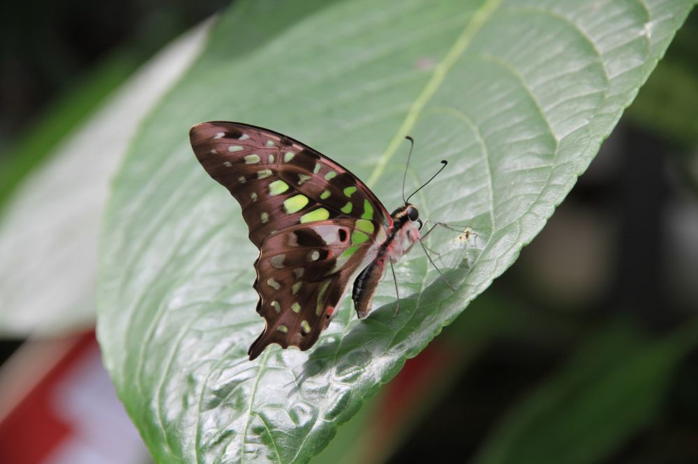 jardin des papillons grevenmacher 05