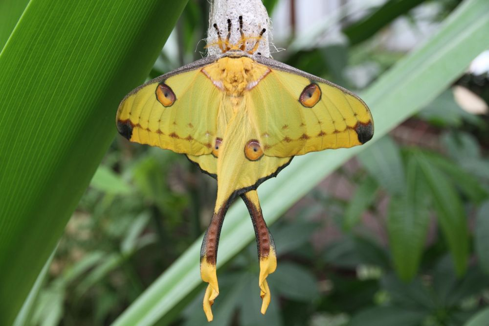 jardin des papillons grevenmacher 02