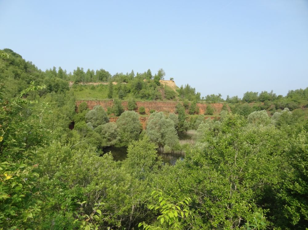 nature reserve prenzebierg  giele botter