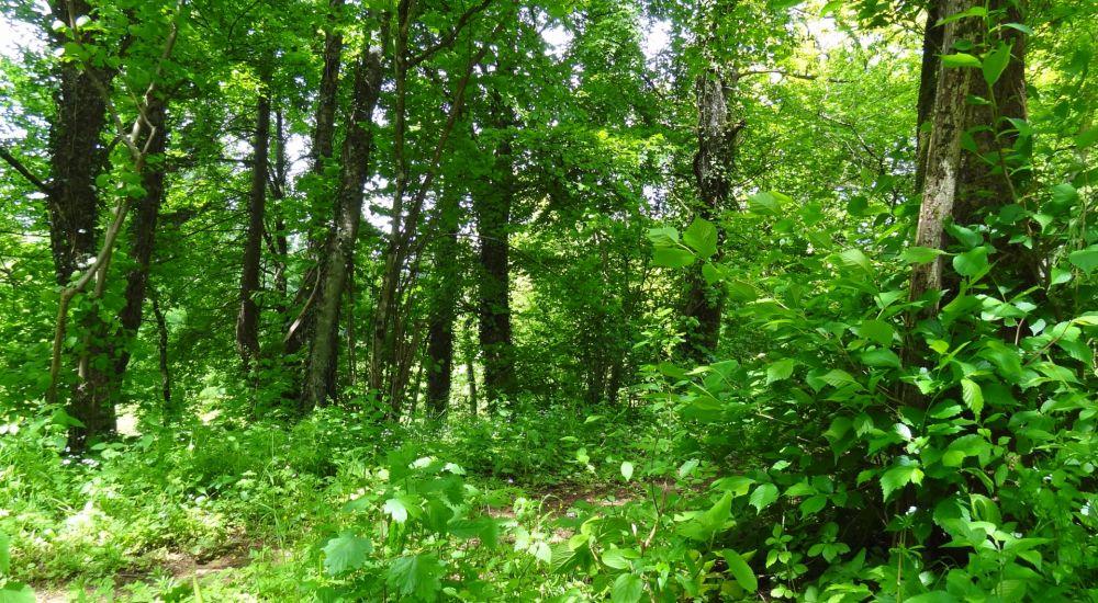 Nature reserve Um Bierg
