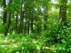 reserve naturelle beetebuerger besch 01