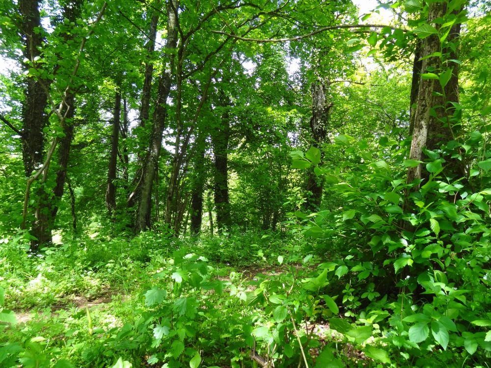 nature reserve beetebuerger besch 01