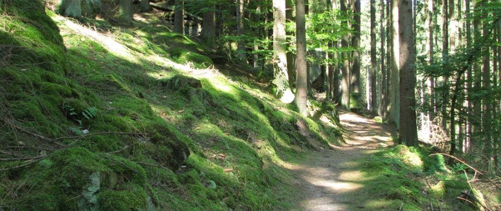mtb trail bech