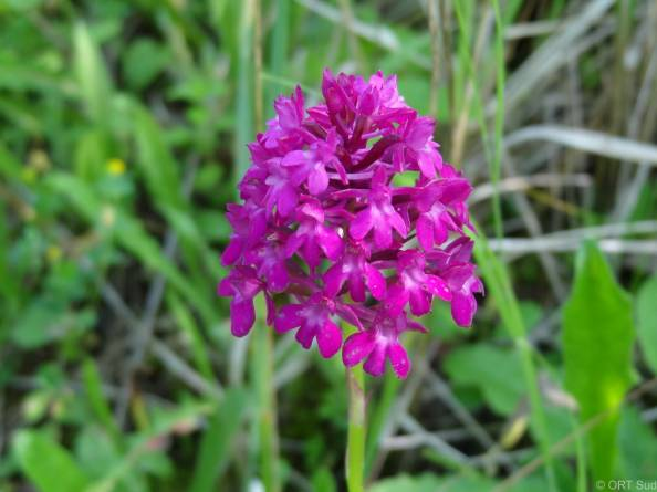 giele botter orchidee8