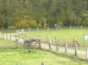 naturerlebnispark in bedigen
