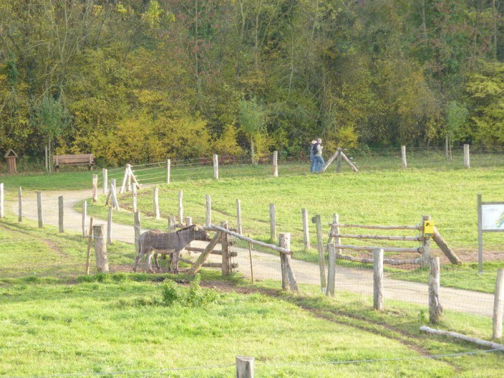 nature discovery park in bedigen