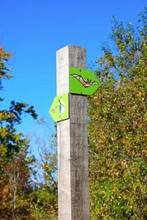 didactic trail natura 2000  ellergronn esch sur alzette photo