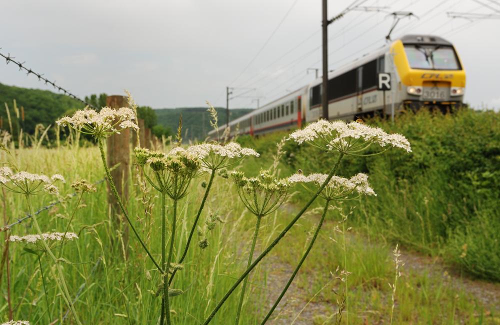 19 station naar station dommeldange luxembourg foto