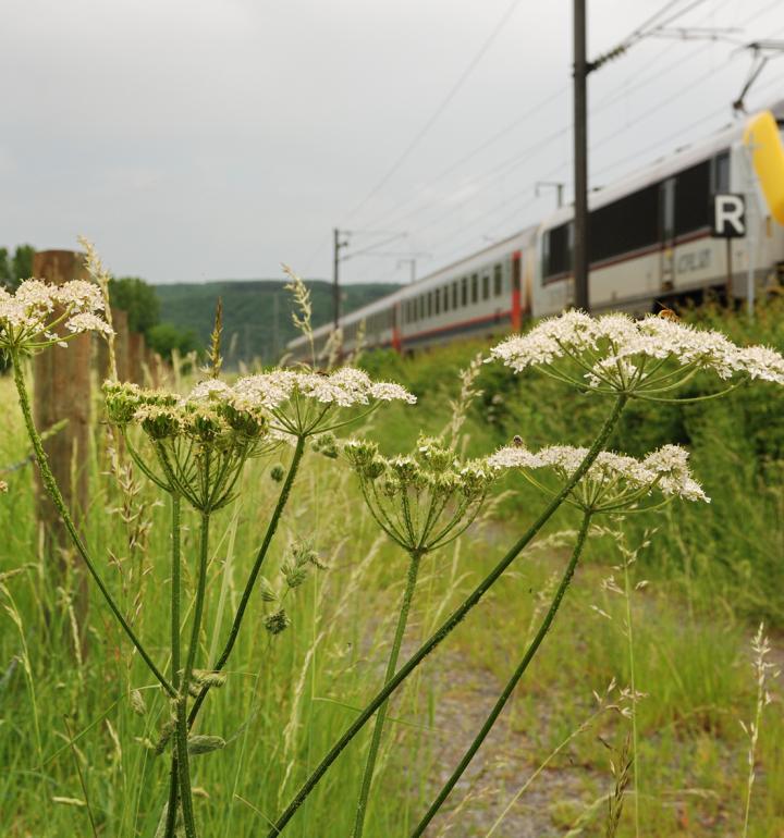 19 gare en gare dommeldange luxembourg gare photo