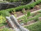 jardin de wiltz 07 2013 6