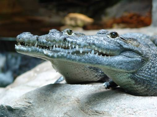 bettembourg parc merveilleux crocodile parc merveilleux