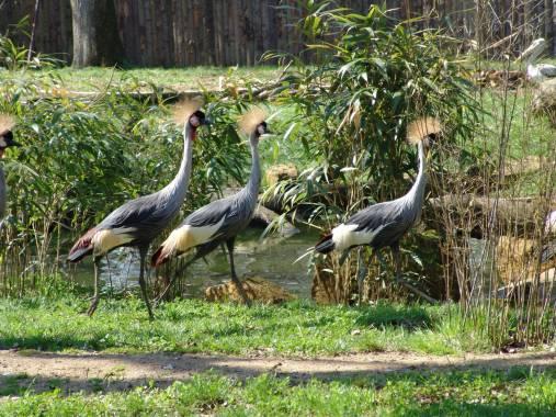 bettembourg parc merveilleux 02 parc merveilleux
