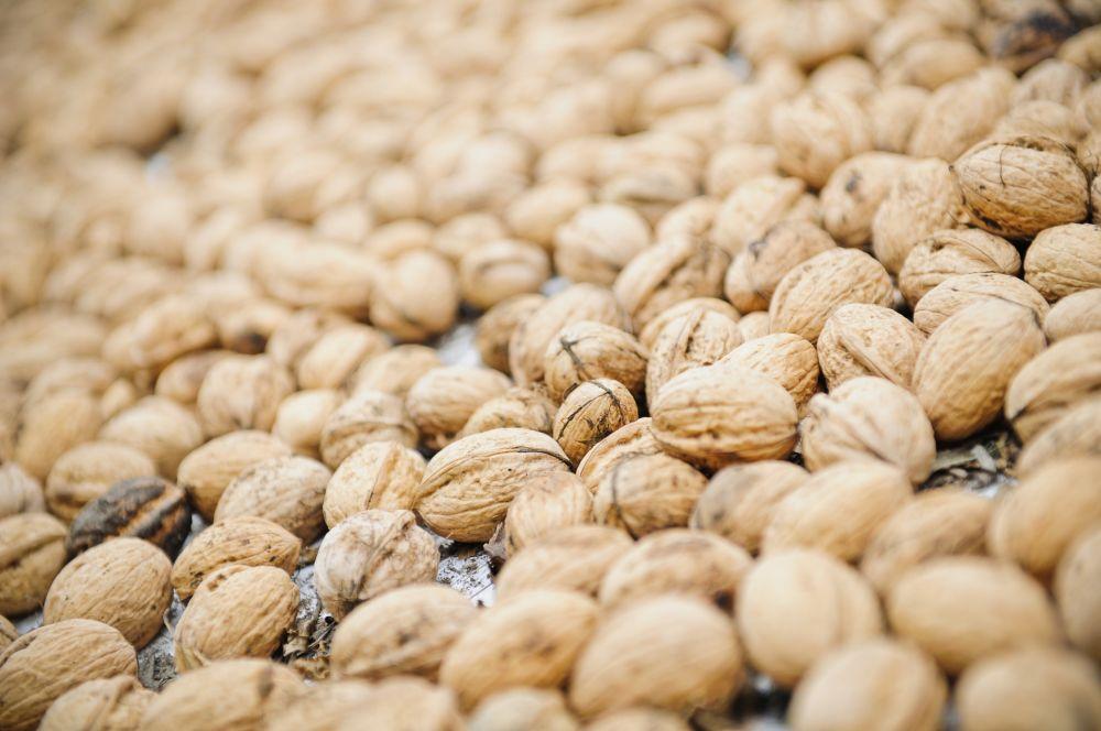bieschbecher atelier mersch walnuts