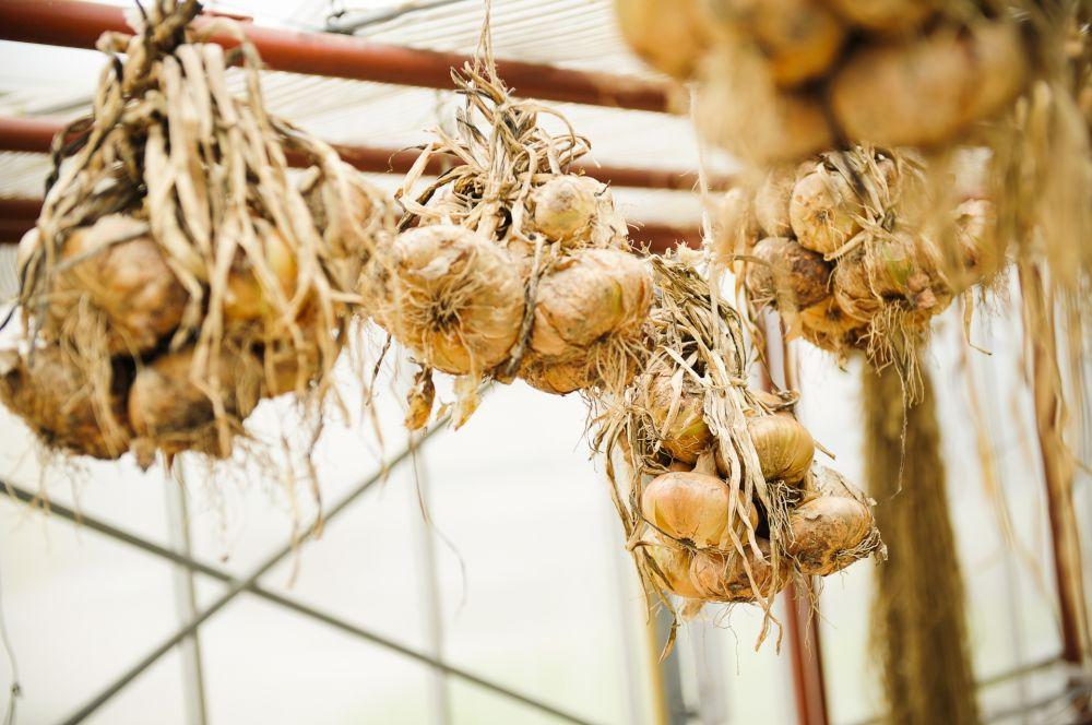 bieschbecher atelier mersch onion