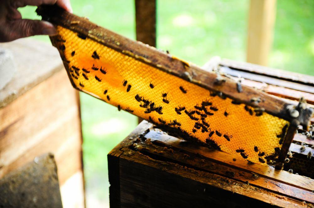 romain kieffer langstroff brouch honeycombs