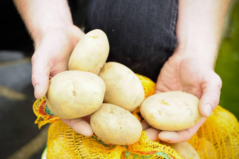 serge pesch brouch potato