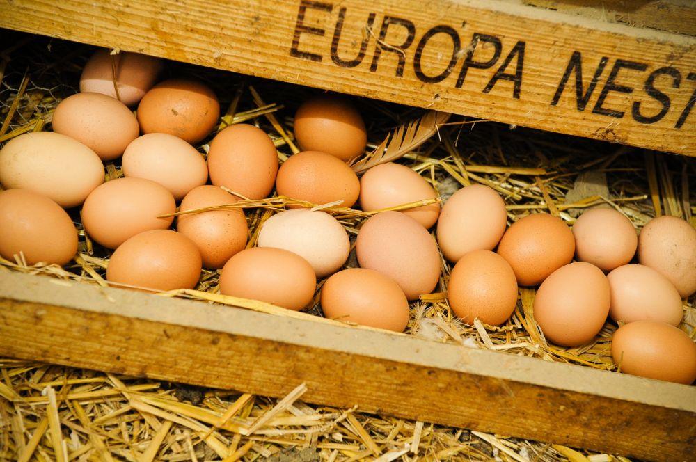 a steffen s eier von freilaufenden huhnern
