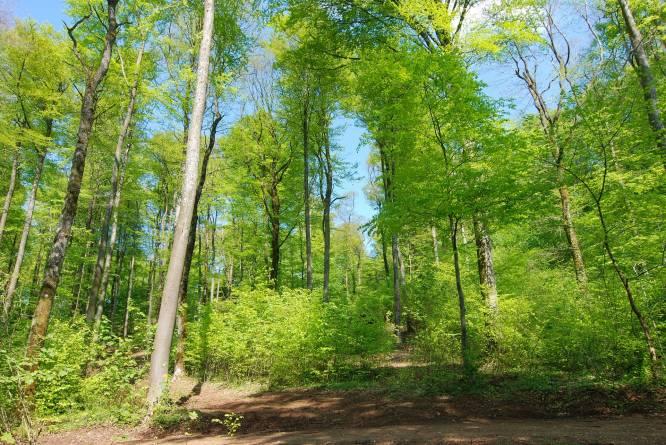 naturschutzgebiet ellergronn administration des eaux et forets