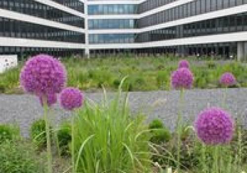 42 luxembourg amenagement exterieur de limmeuble de bureaux drosbach cloche dor