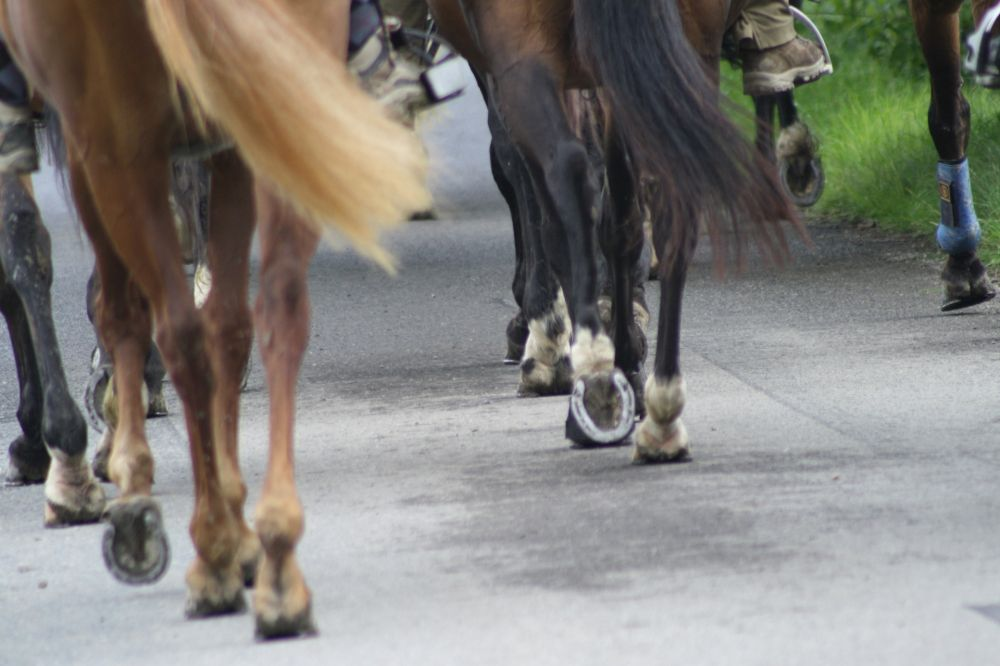 horseride tour 12 eischtal rundtour 33 km
