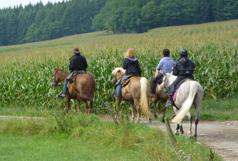 randonnee a cheval 17 beim nachbar eifel 26km
