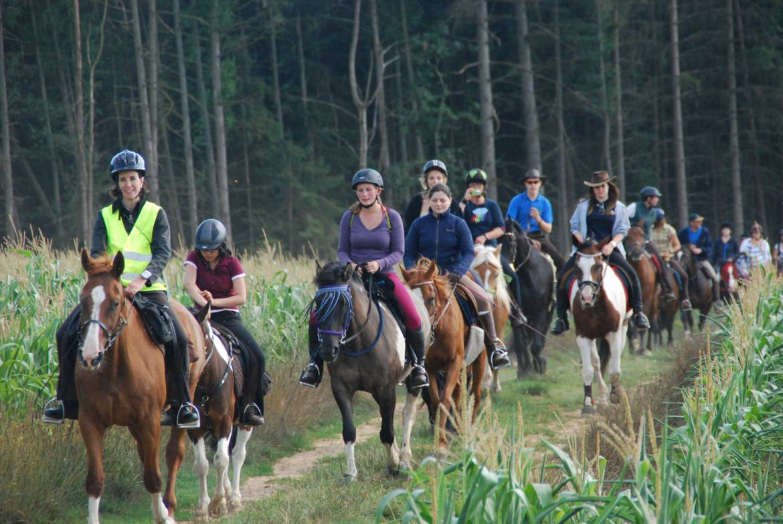 Ecole d 39 equitation de stegen ort mullerthal - Cours de cuisine luxembourg ...