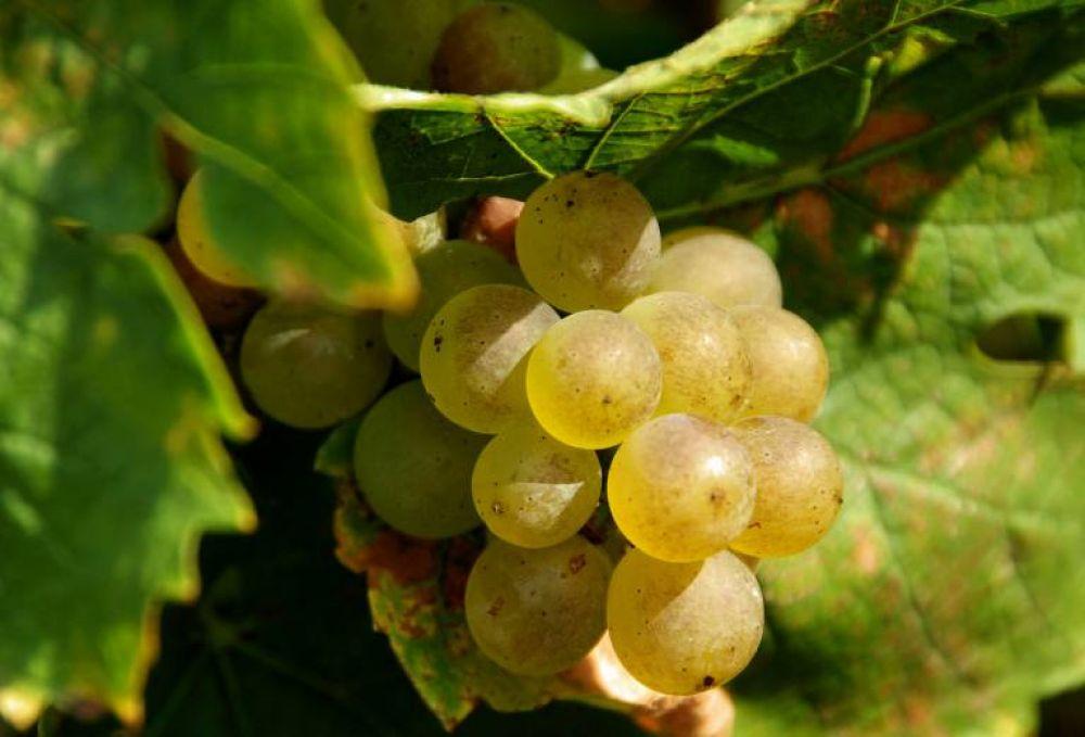 legill grappe