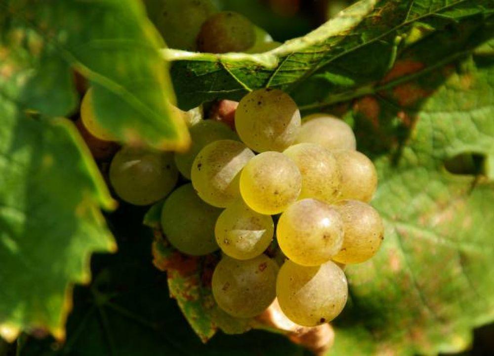 viticole schumacher lethal