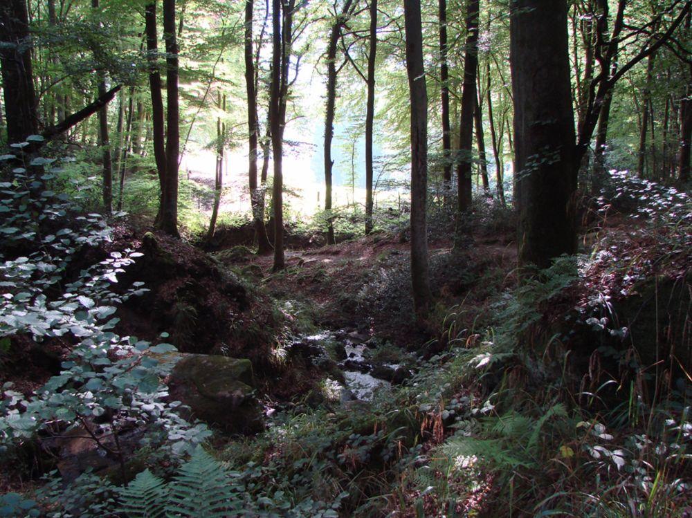 bosrijk gebied