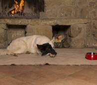 muppenhotel hund am kamin