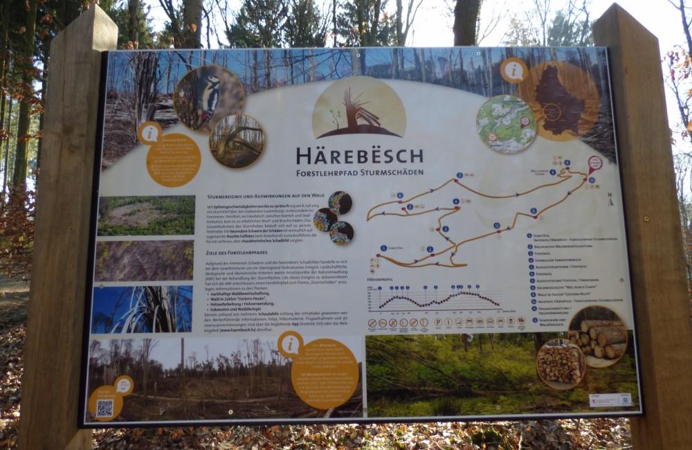 15 sentier nature harebesch forstlehrpfad leader letzebuerg west 8