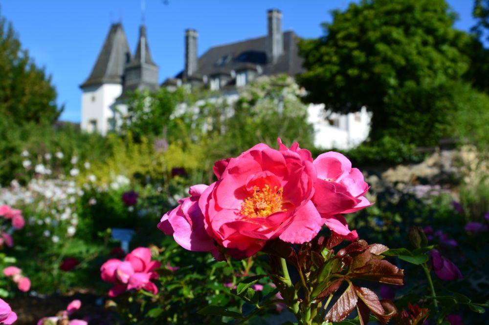 schuttrange chateau de munsbach roseraie letzebuerger rousefrenn