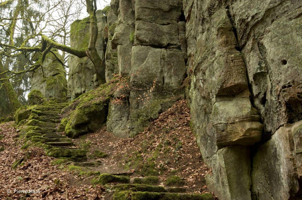 pierre haas w 17 hab5528 haler brenschenterlay w4