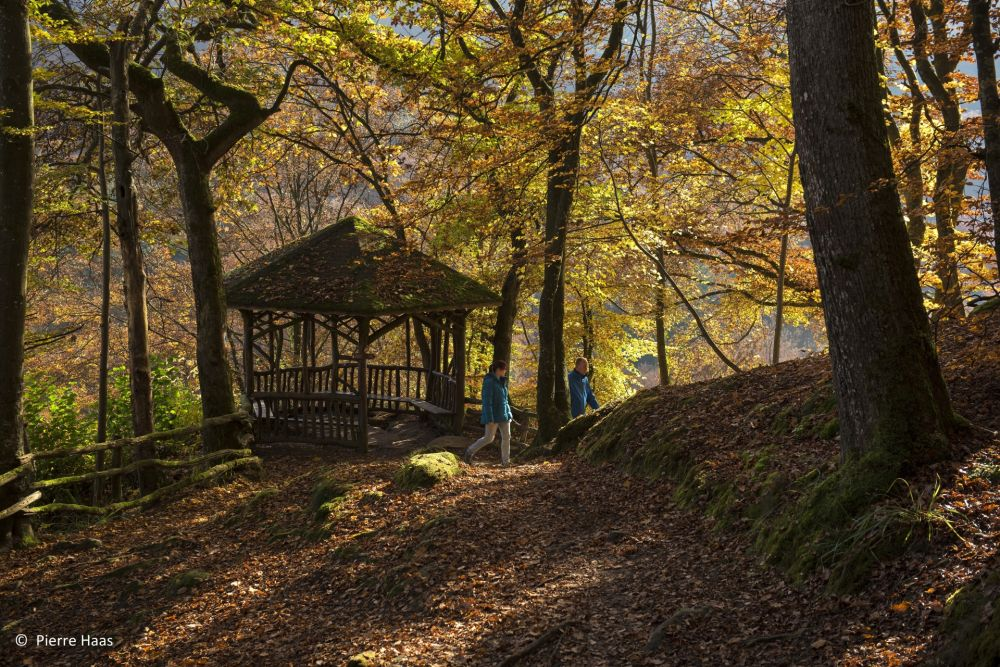 w7 pierre haas mellerdall landschent pavillon hp58361