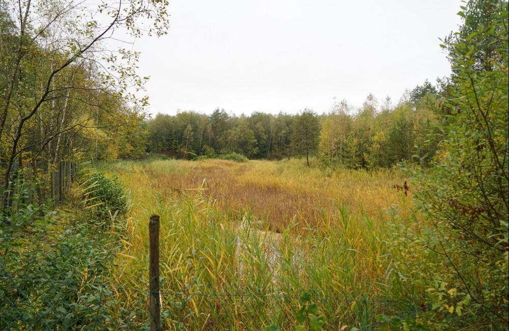 reserve naturelle schwaarzenhaff stengefort001