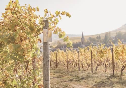 maison viticole schmit fohl m 3 von 23