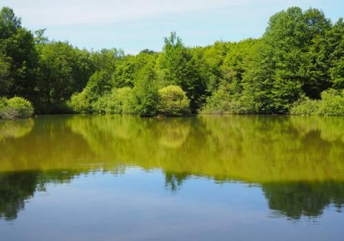 crauthem sentier forestier 16 2020 05 18