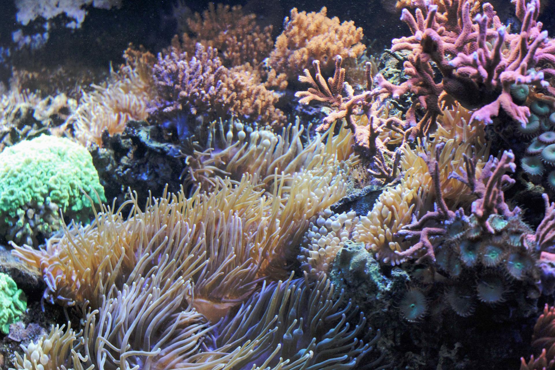 aquarium wasserbillig visit moselle luxembourg