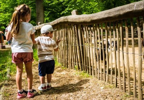im bettemburger tierpark parc merveilleux koennen familien einen wundervollen tag verbringen