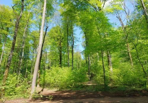 naturschutzgebiet ellergronn