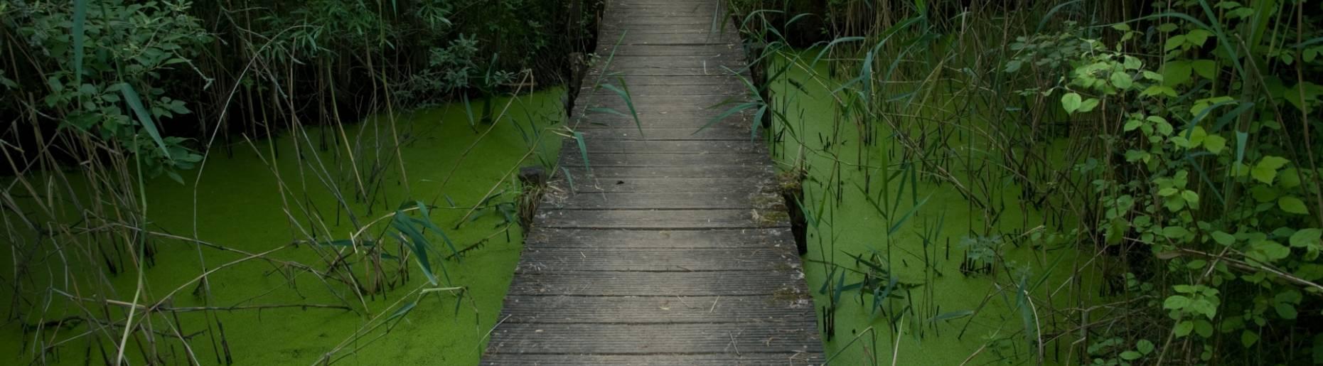 biodiversum natuurreservaat haff reimech