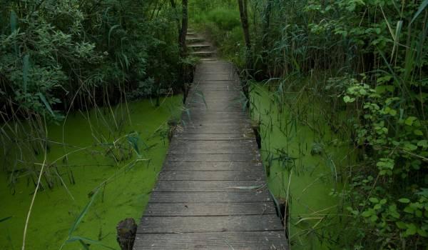 biodiversum reserve naturelle haff reimech