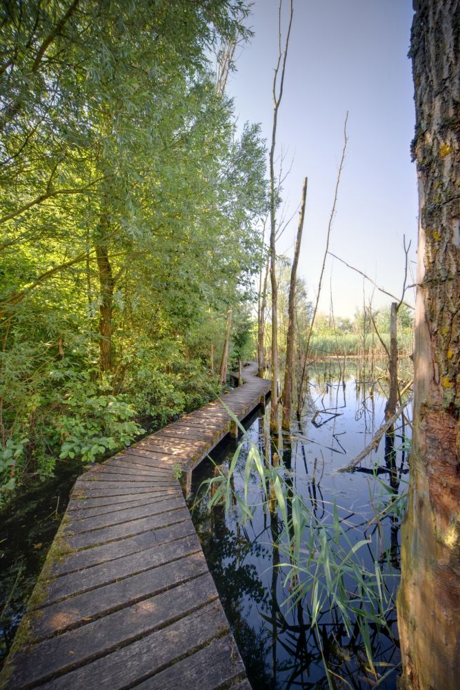 biodiversum nature reserve haff reimech 01