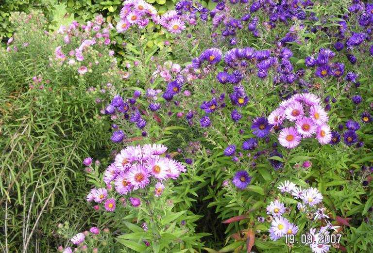 Aufgrund Des Breit Gestreuten Sortimentes Bietet Der Garten Während Der  Gesamten Saison Ein Attraktives Angebot An Blühenden Pflanzen.
