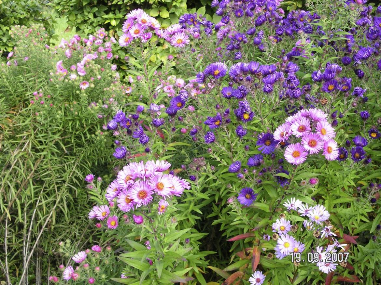 mediterranean garden - Mediterranean Garden