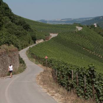 rundwanderroute nature and wine discovery grevenmacher 1