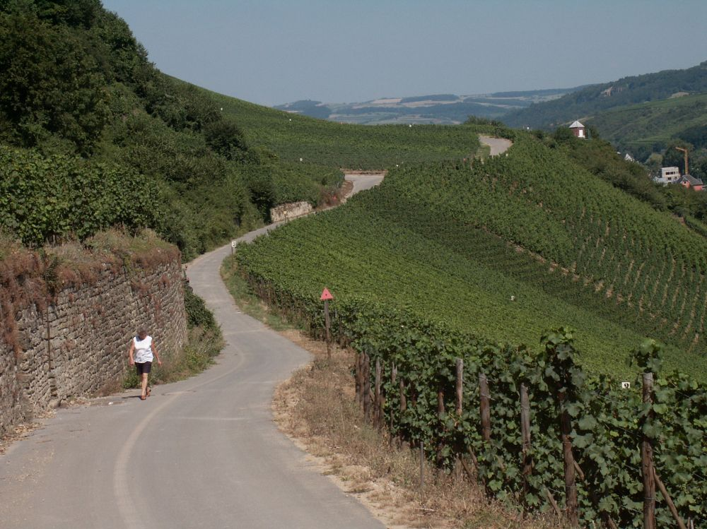 circuit pedestre nature and wine discovery grevenmacher 1