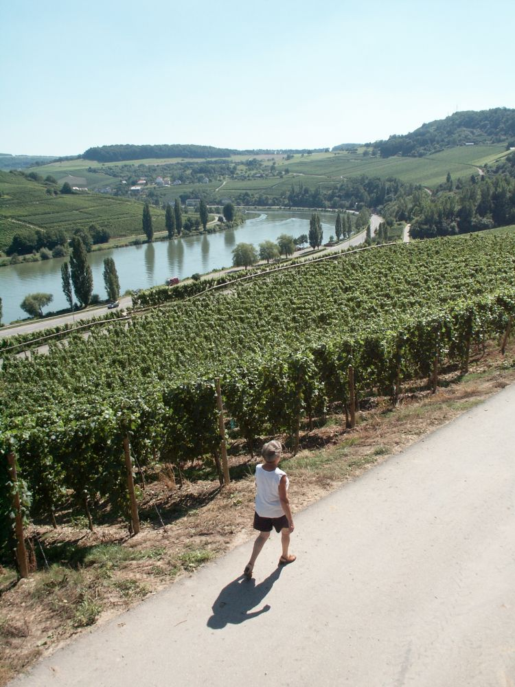 circuit pedestre nature and wine discovery grevenmacher